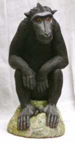 JJ VINCENT Crested Black Macaque