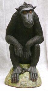JJ VINCENT Crested Black Macaque