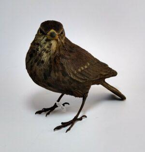 female blackbird ceramic