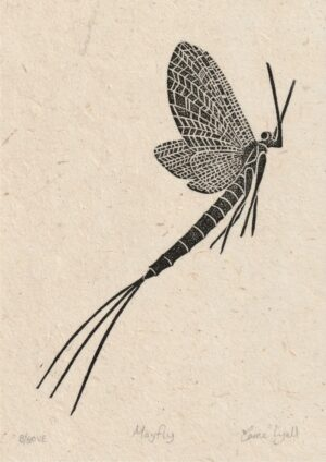 print of insect